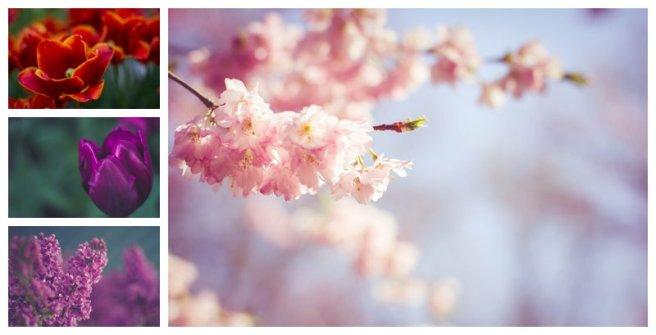Keukenhof_Flowers
